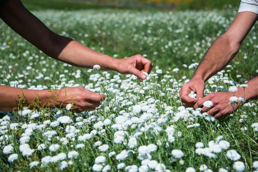 Beauty Garden cueillette de fleurs
